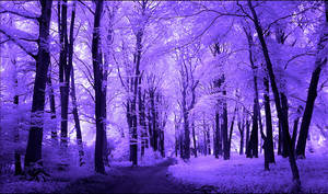Purple Trees Infrared...