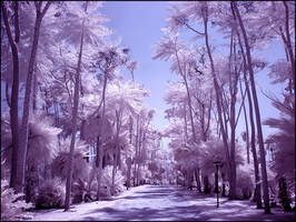 Palm Tree Paradise infrared... by MichiLauke