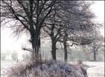 Tree Tripple...