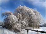 Ice Trees... by MichiLauke