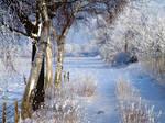 Winter Scape...