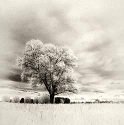 White Tree infrared by MichiLauke
