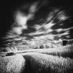 Wheatfield b+w infrared