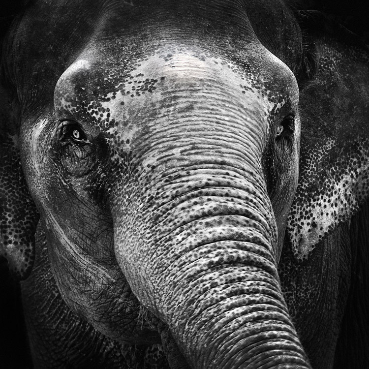 Elephant eyes by MichiLauke