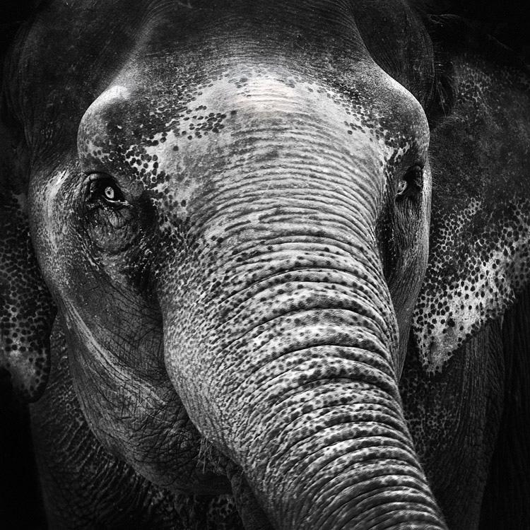 Elephant eyes by MichiLauke