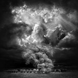 Home Tree - infrared