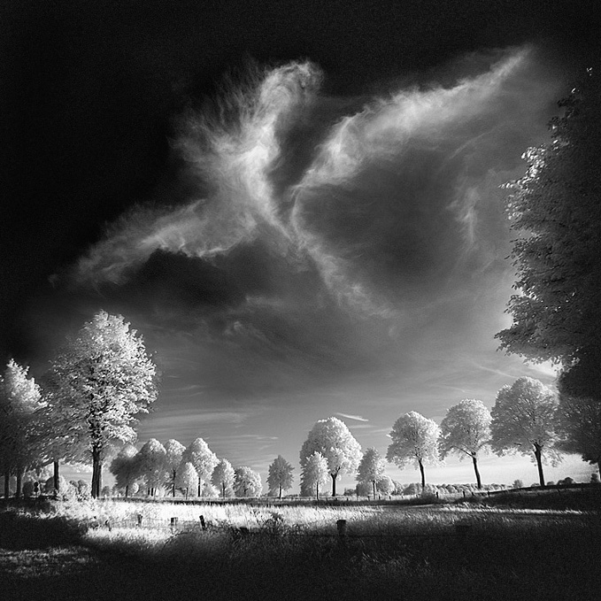 Phoenix infrared... by MichiLauke