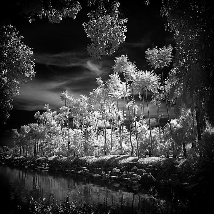 Tropical Garden - infrared