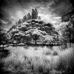 Tree - infrared by MichiLauke