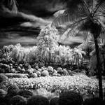 Infrared Trees