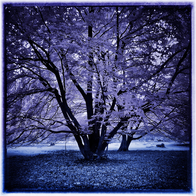 VIOLET - Page 2 Holy_tree_by_michilauke-d3gnpg8