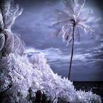 Palm Beach infrared