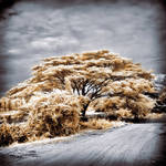 Tree at the road