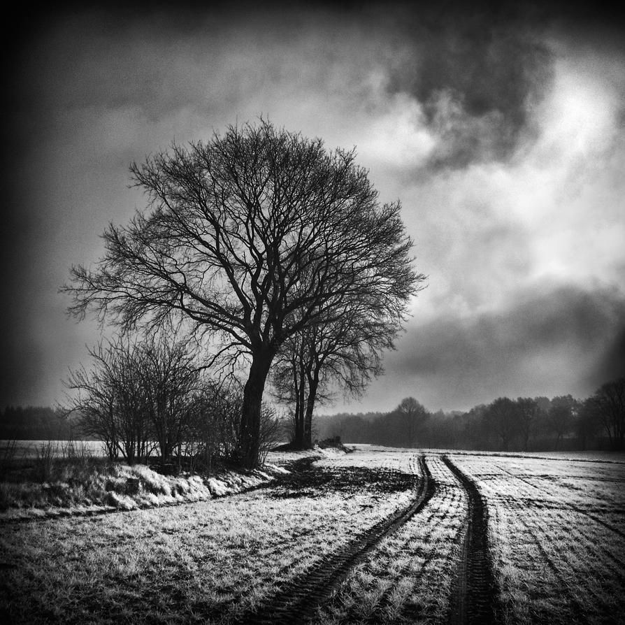 Morning Mist III by MichiLauke