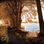 Wolni Lake infrared...