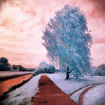 Blue Tree infrared