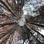 First Snow by MichiLauke