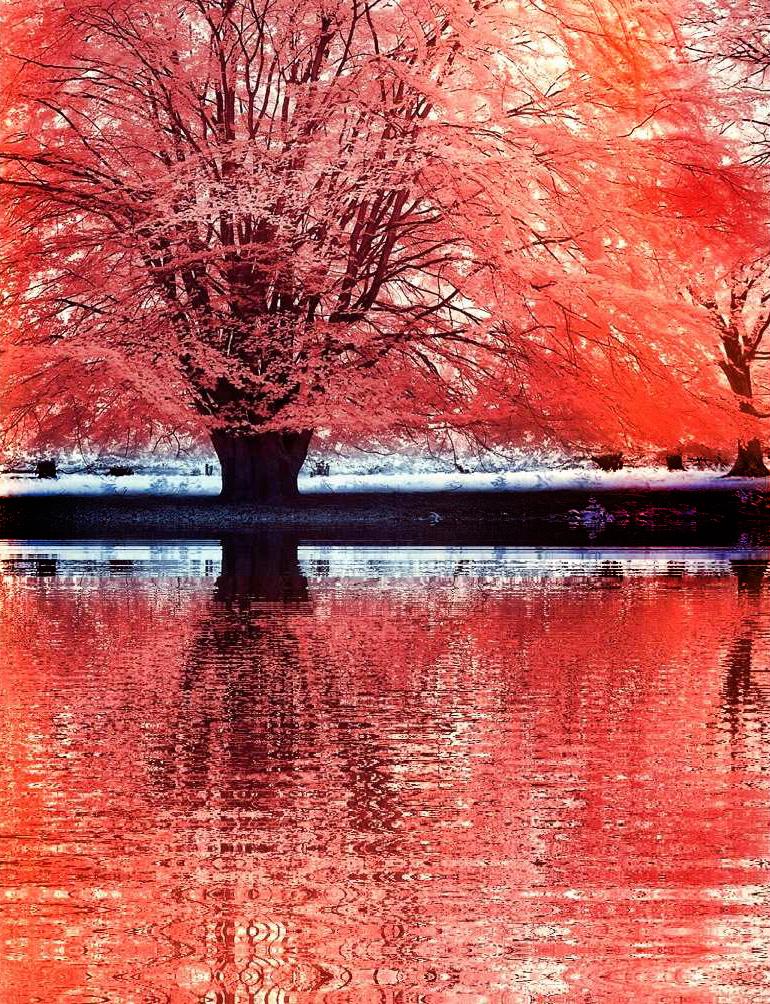 Red Tree infrared by MichiLauke