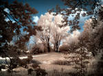 Tree infrared (at Lake Wolny Germany)