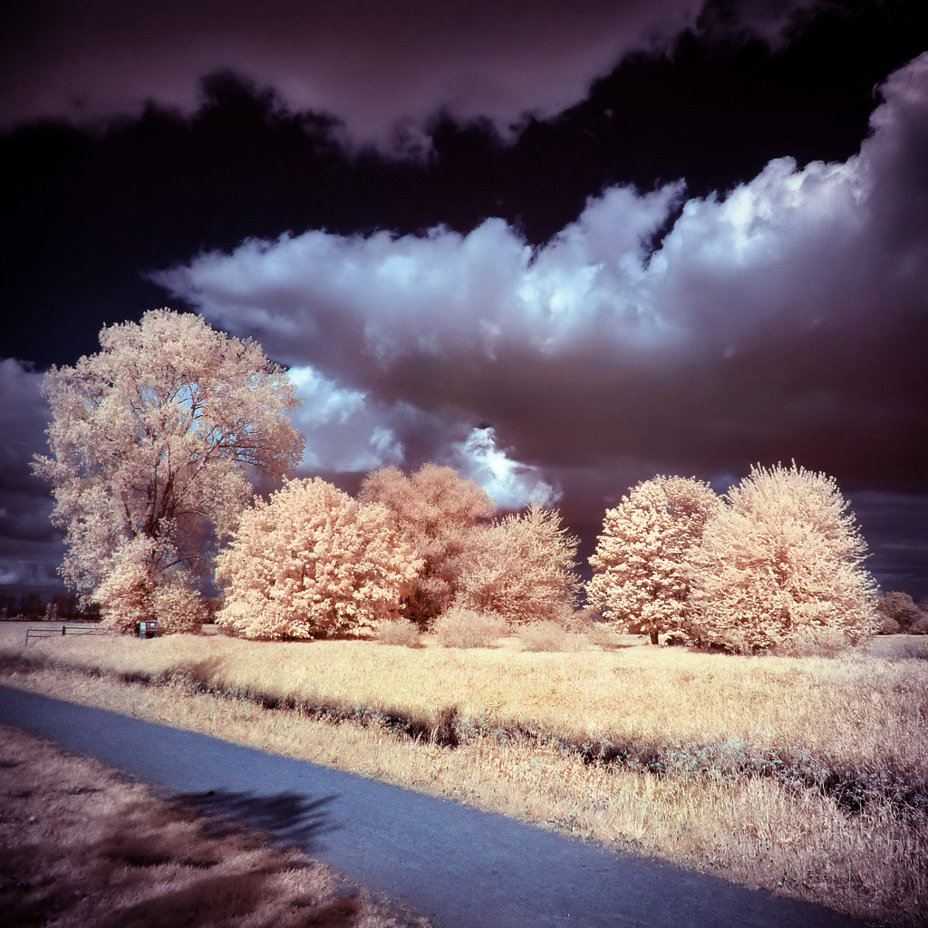 Surreal Infrared Landscape by MichiLauke