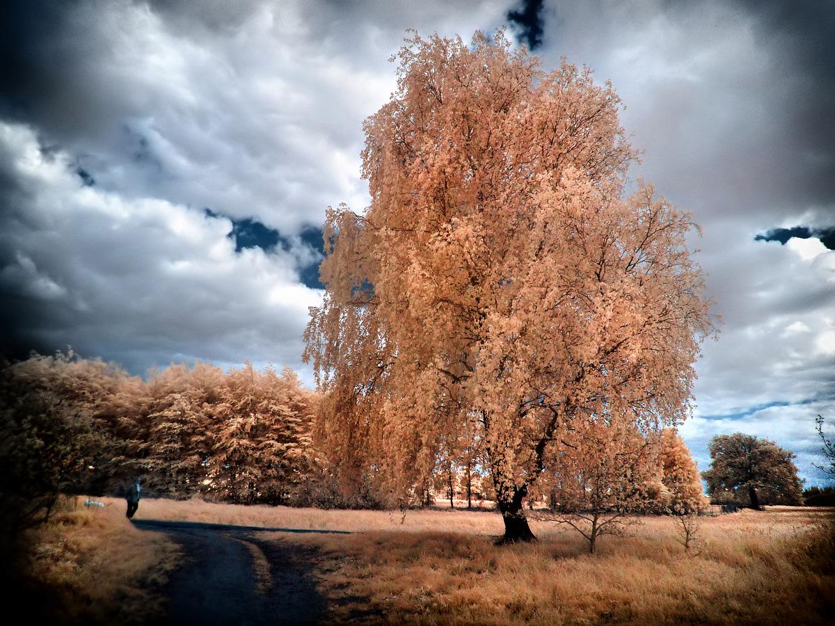 OrangeTree infrared by MichiLauke