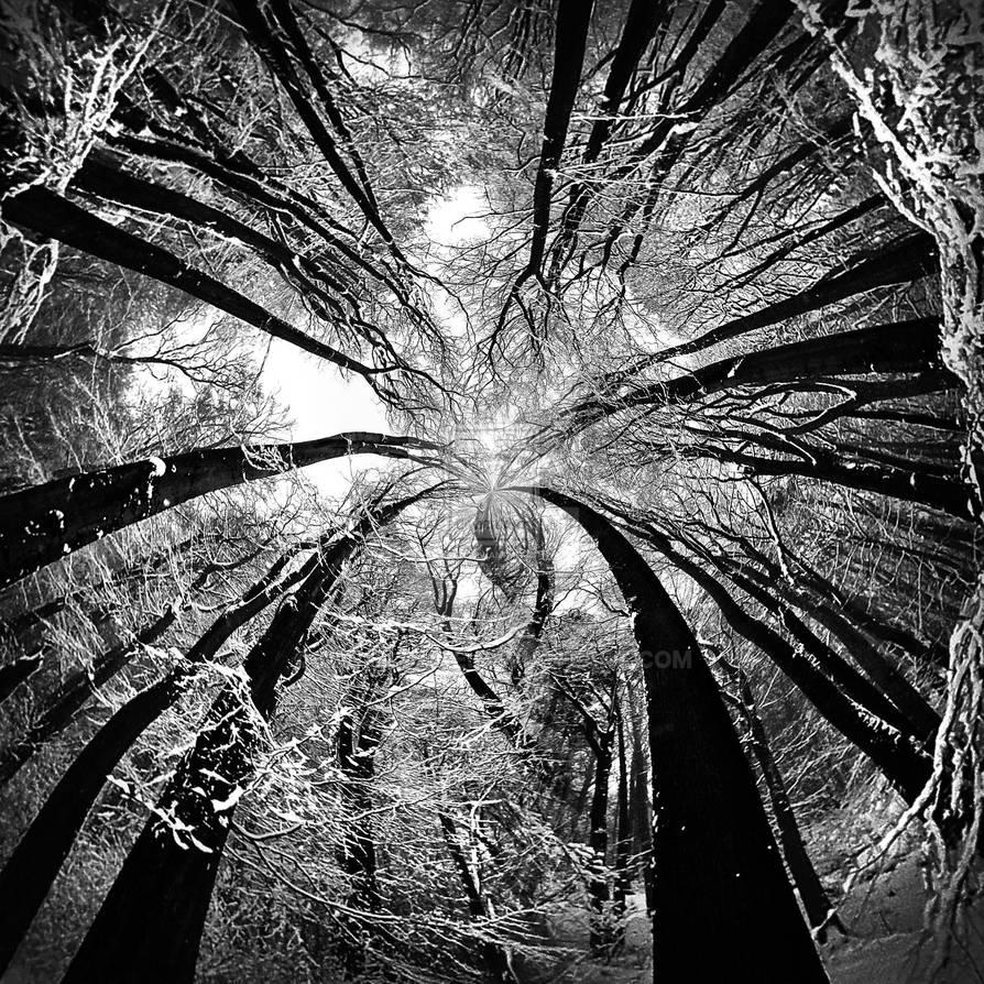 White Snow in Magic Black Forrest by MichiLauke