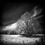 Spring Mood infrared