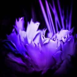'Devil' Cactus infrared by MichiLauke