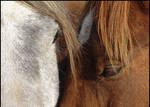 Horses Love...