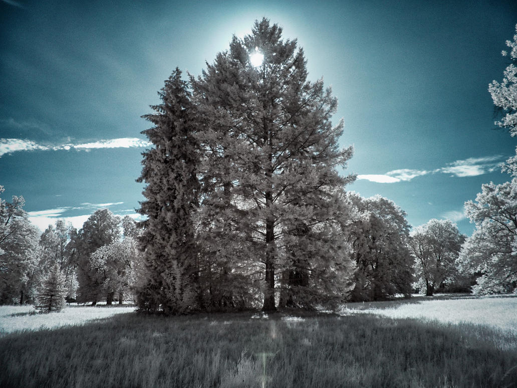 Borsig Park Berlin Infrared by MichiLauke