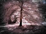 Back Light Tree infrared
