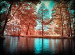 Summer in September IV infrared by MichiLauke