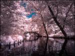 Summer in September V infrared by MichiLauke