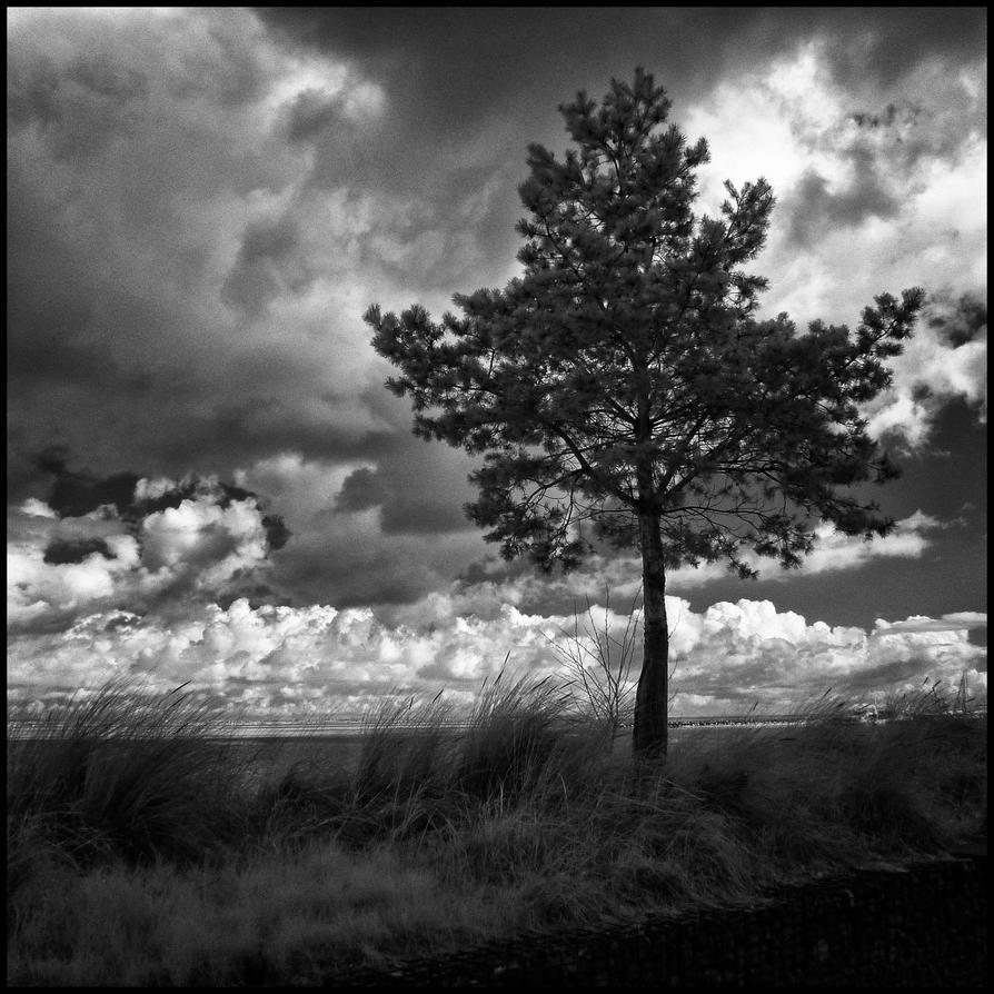 Black Tree infrared by MichiLauke