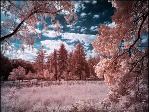 Tegeler Forest Berlin infrared