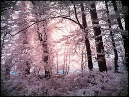 Tender Leaves infrared