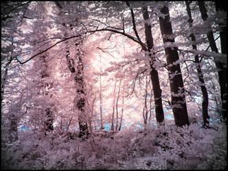 Tender Leaves infrared by MichiLauke