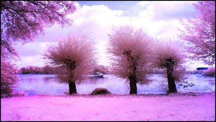 Three Willow Trees infrared by MichiLauke