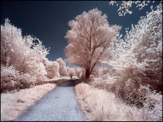 Springtime walk infrared by MichiLauke