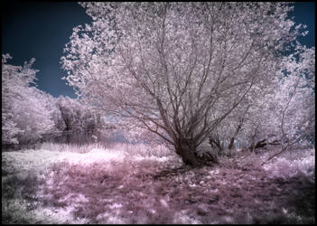 Backlight Nature infrared