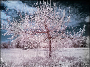 Little Funny Tree infrared
