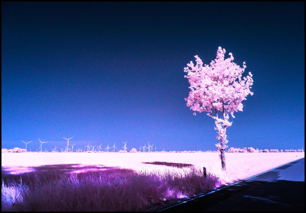 Power Wheels infrared by MichiLauke