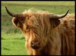 Scotland IV - The Cow... by MichiLauke