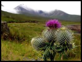 Scotland XVIII - Thistle...