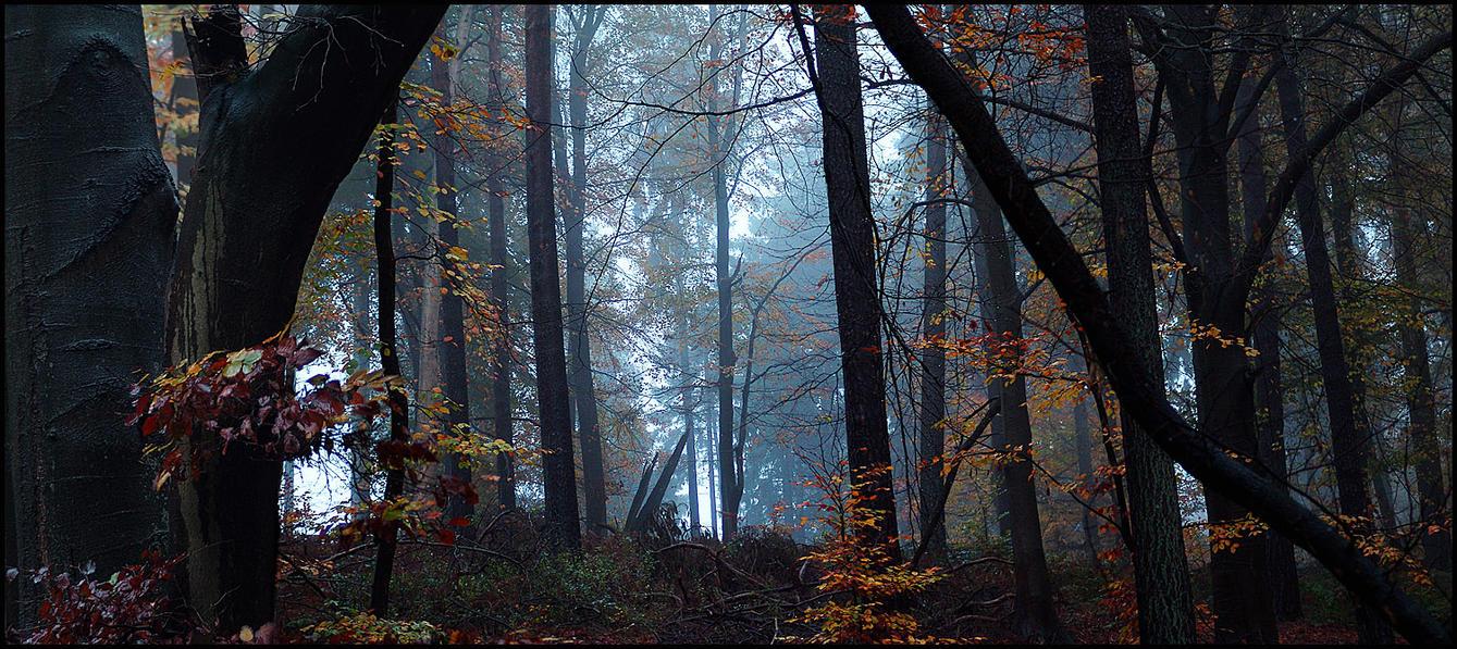 Just a rainy foggy day... by MichiLauke