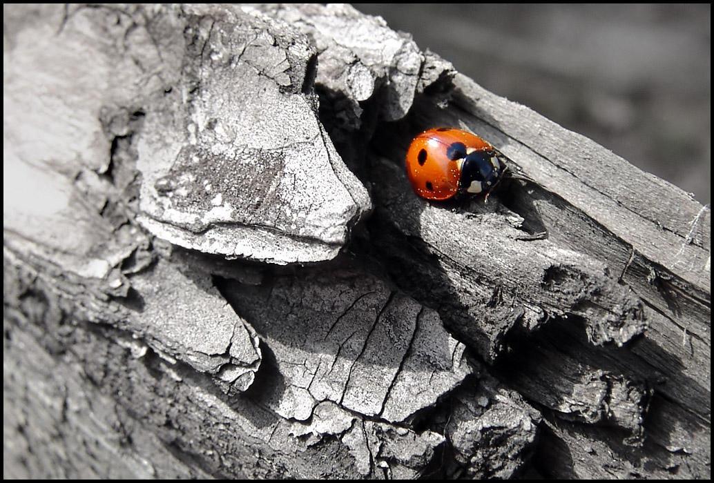 """Obrázek """"http://fc01.deviantart.com/fs10/i/2006/121/3/f/Ladybird____by_MichiLauke.jpg"""" nelze zobrazit, protože obsahuje chyby."""