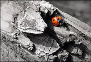 Ladybird...