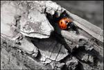 Ladybird... by MichiLauke