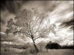 Birch...
