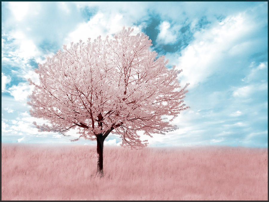 Pink Tree infrared...